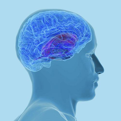 Les apports de l'imagerie cérébrale