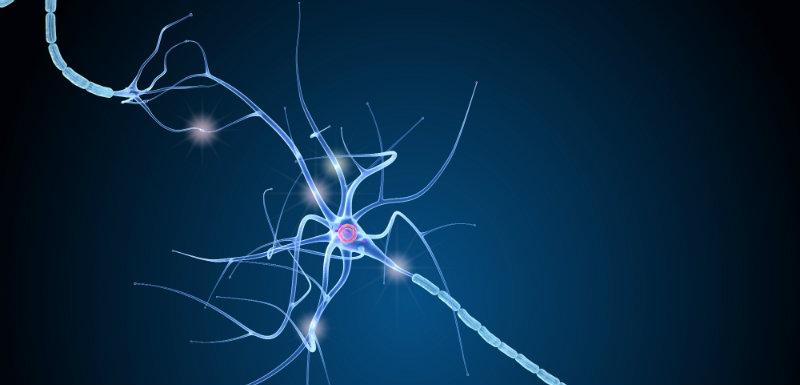 nestine-neurogenese