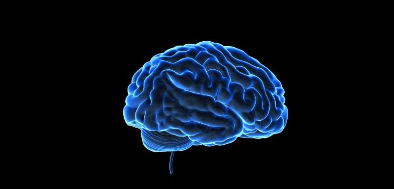 cerveau-antipsychotiques
