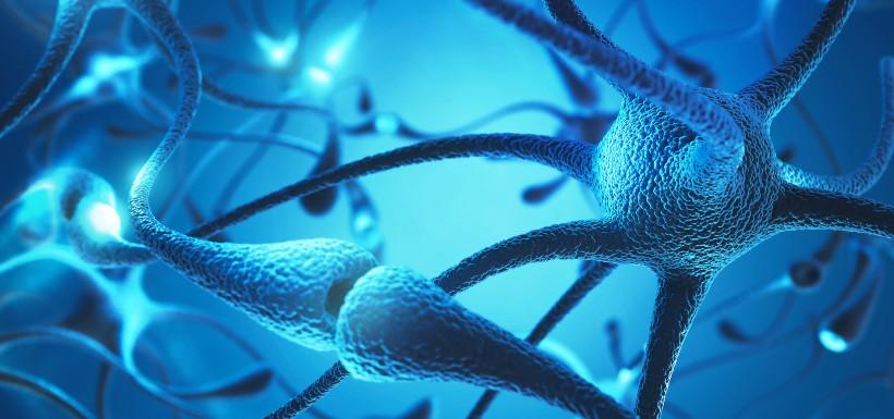 Une nouvelle piste thérapeutique pour lutter contre la neurodégénérescence
